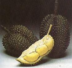 durian_monthong