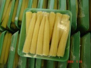 fresh_baby_corn