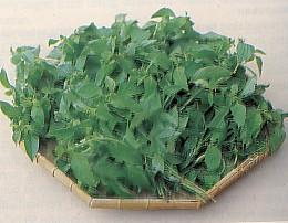 basil, basil leaves, kemangi