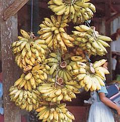 pisang_mas
